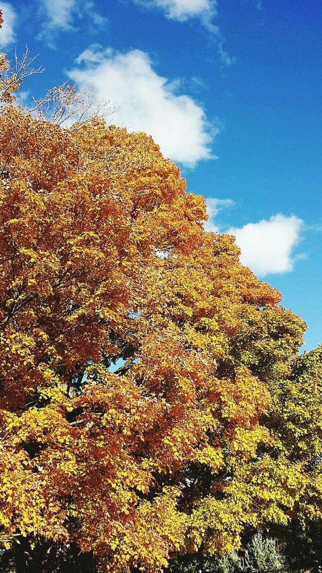 Fall Autumn Autumn Colors Fall Colors Autumn Leaves Trees 가을 나무 단풍 가을 정서