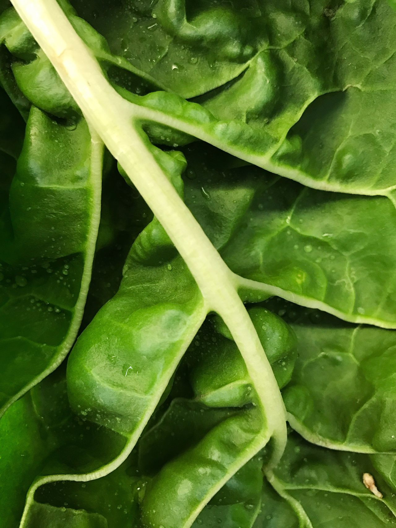 Lettuce Green Color Full Frame Freshness Healthy Eating Vegetable Food Backgrounds Food And Drink Close-up No People Leaf Indoors  Day Walmart IPhoneography IPhone Photography Nature Iphone 6 IPhone 6s IPhone 7 Colorful Composition Fresh Freshness