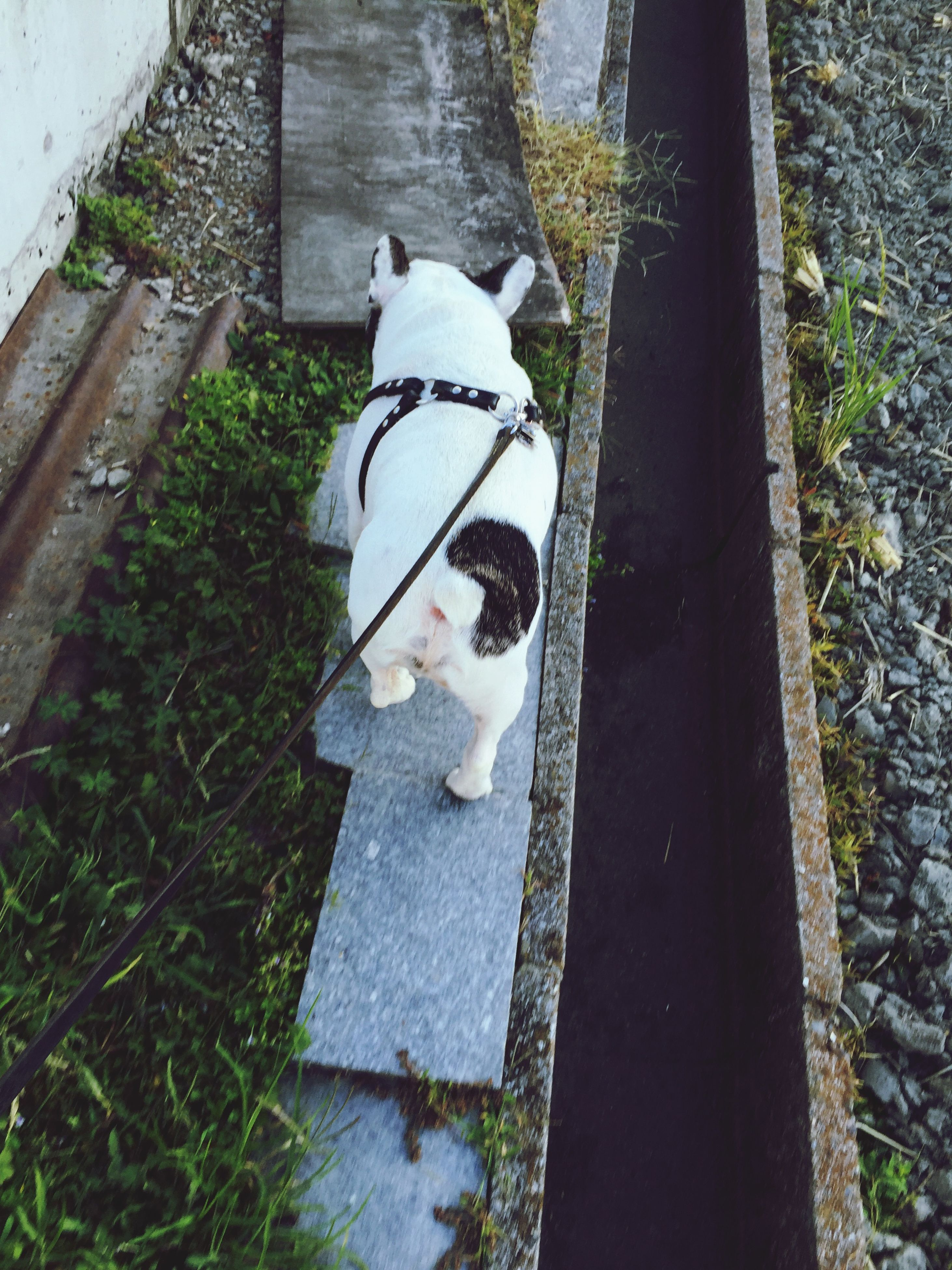 dog, pets, one animal, domestic animals, animal themes, high angle view, mammal, day, outdoors, sitting, standing, one person, full length, reflection, portrait, street, looking at camera, black color, built structure