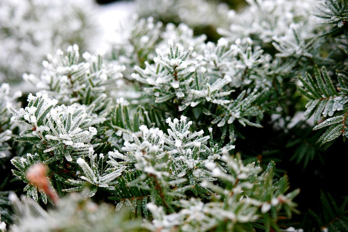 Winter Forest Winter It's Cold Outside Snow Covered Snow Covered Branch Winter_collection Showcase: January January Cold Winter ❄⛄ Frosty Winter Season Winter Is Coming Cold And Frosty Frosty Days Frosty Day