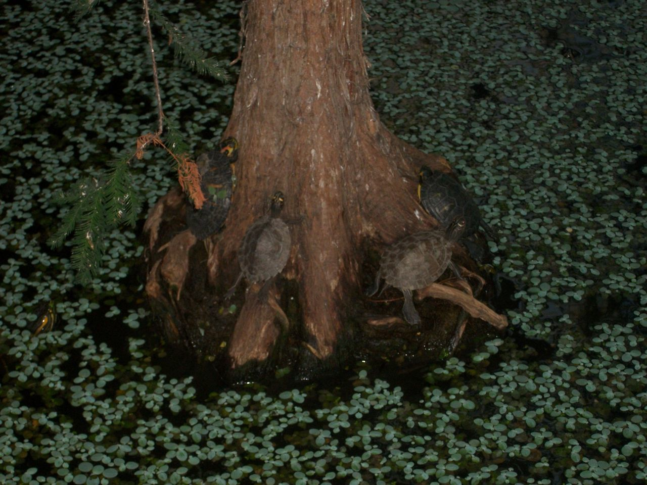 Atocha Train Station Animal Themes Atocha Close-up High Angle View Indoor Nature No People Tree Tree Trunk Turtle