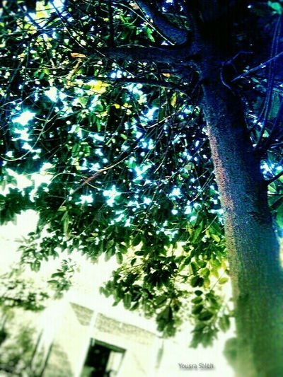 Atmosphere Atmospheric Scene Tree Trees Tree And Sky Trees And Sky Tree&sky Tree & Sky Green Tree Green Trees Green Color Green Green Green!  Green Plant Tree Leaves Tree Branches Tree Trunk Tree Details Bright Tree Bright Light Tree_collection  Trees Collection Treescape The Beauty Of Nature Atmospheric Mood Love To Take Photos ❤ 18May_2016