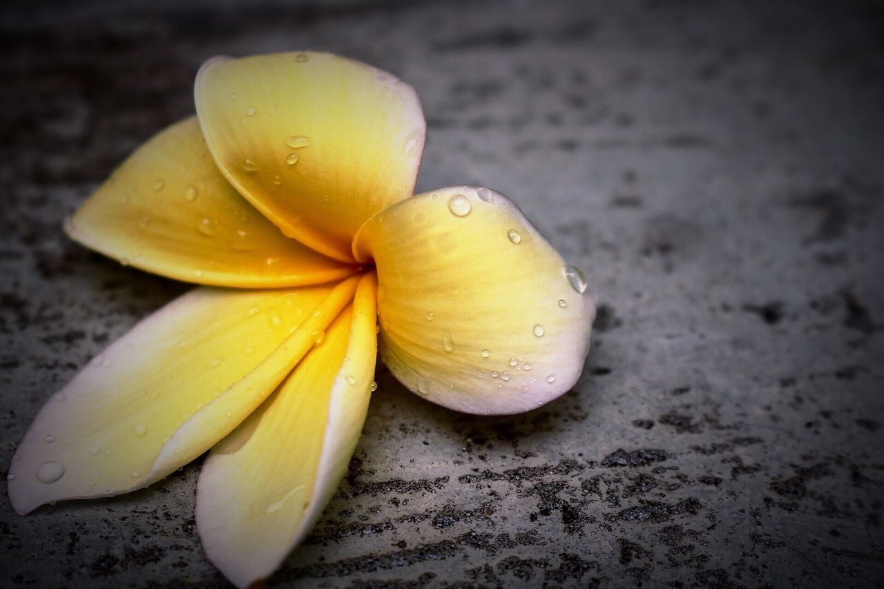 food and drink, close-up, food, yellow, freshness, healthy eating, no people, wet, petal, fruit, flower head, indoors, nature, fragility, day