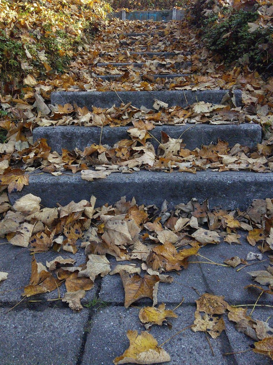 Beuty Of Nature Nature_collection Nature Autumn🍁🍁🍁 Stairs