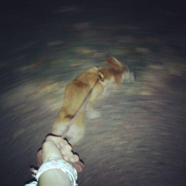 гуляем:) моя собака ЭляСтайл