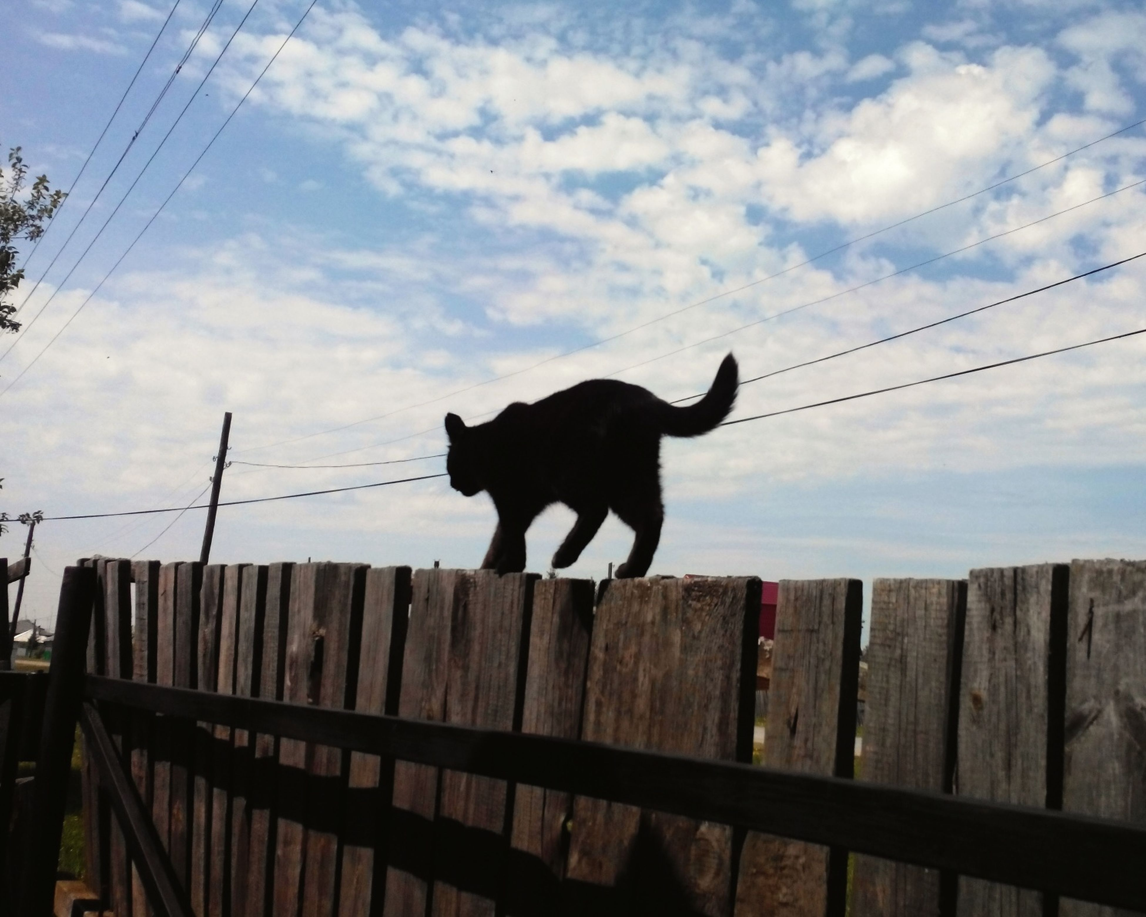 animal themes, one animal, mammal, domestic animals, pets, low angle view, power line, sky, cable, connection, electricity pylon, electricity, cloud - sky, outdoors, power supply, cloud, full length, zoology, no people, standing