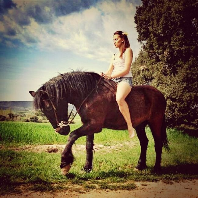 Horse Spring Color AMPt_community