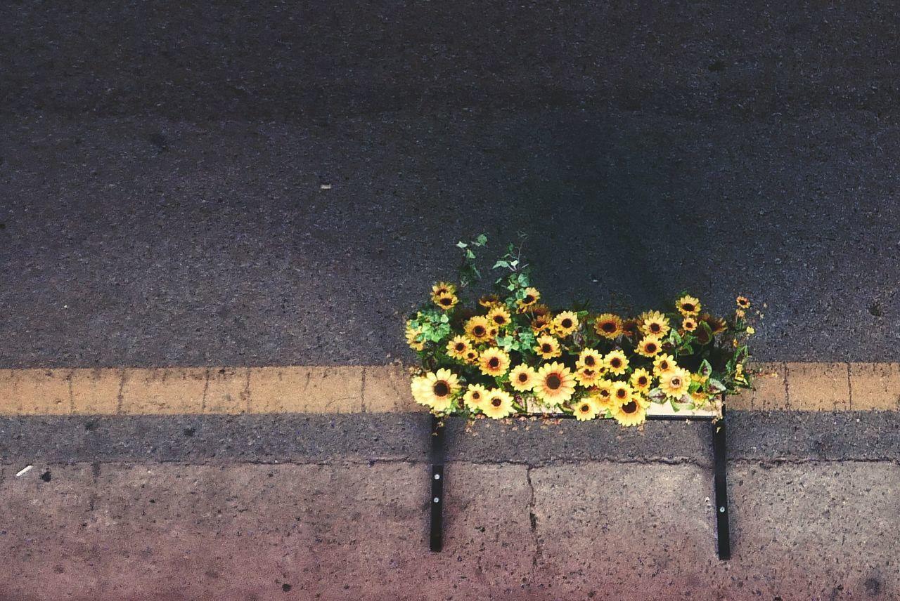 Beautiful stock photos of south korea,  Botany,  Bunch Of Flowers,  Busan,  City Life