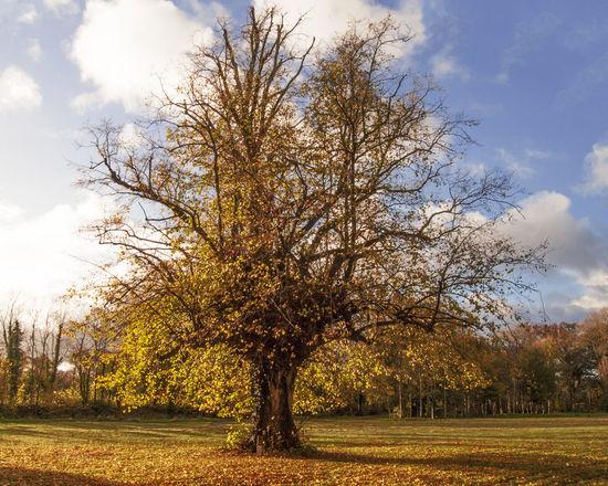 lonely tree Autumn Autumn Colors Autumn Leaves Beauty In Nature Colorful Autumn Colorful Leaves In Autumn Growth Landscape Lonely Tree Nature Outdoors Scenics Sunny Tree