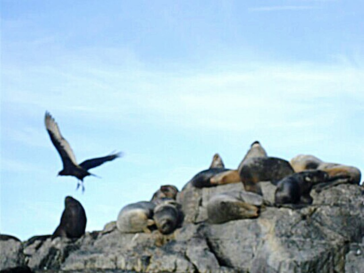 No People Bird Animal Nature Outdoors Animal Themes The Natural World Tranquil Scene Tranquility Canal Beagle Seal Travel Argentina Fin Del Mundo Sea Sea Life Ushuaïa Seal - Animal Sea Lion Sleeping Nature Animal Wildlife Relaxation Animals In The Wild Birds Large Group Of Animals