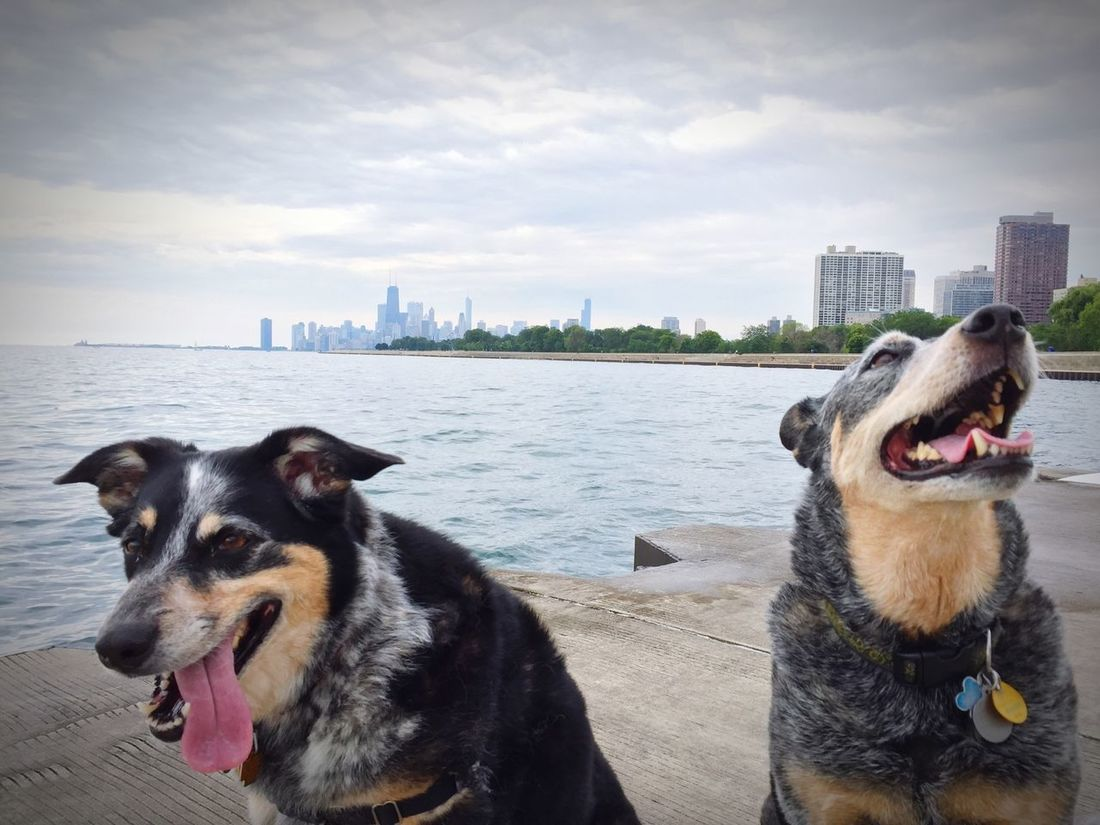 Happy puppies on a lakefront walk. Oscar Maddy
