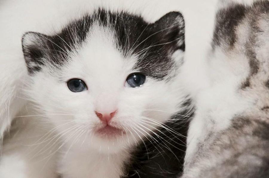 Magnifiques chaton