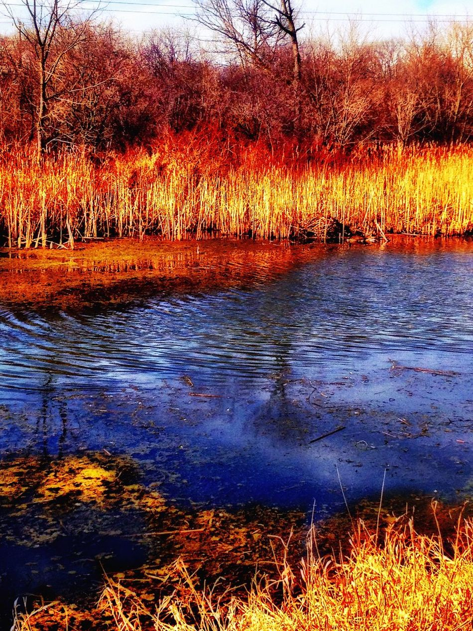 Nature Water Tree Lake Growth Outdoors No People Tranquility Grass Scenics Beauty In Nature Day Living In The Moment Nature Cold Temperature Magical The Way Forward Extreme Edit