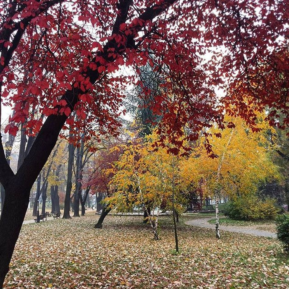 Belgrade Fall Ig_belgrade Ig_bgd