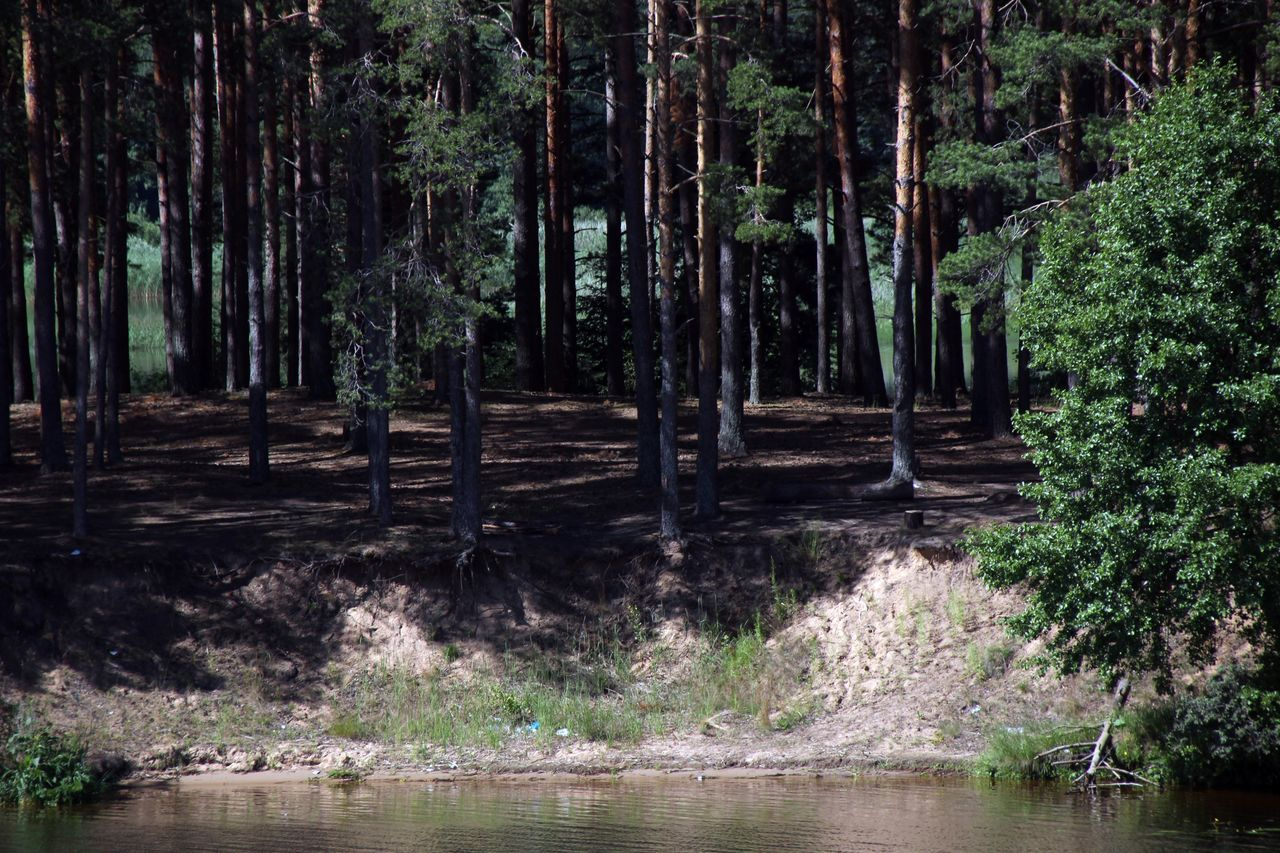 Beauty In Nature Forest Nature Outdoors Russland Water Wilderness Wolga WoodLand