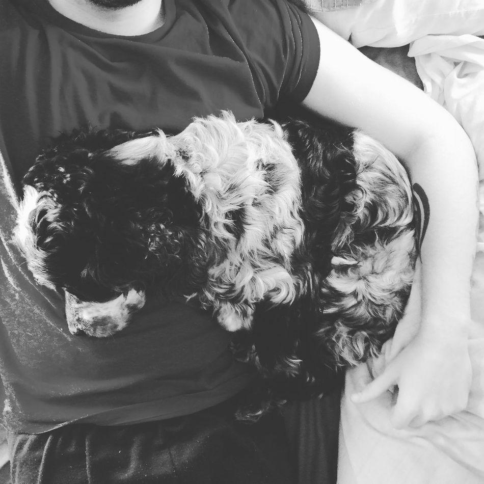 Dog Mydog Parners Pet Love Dream Friends Day Sleep