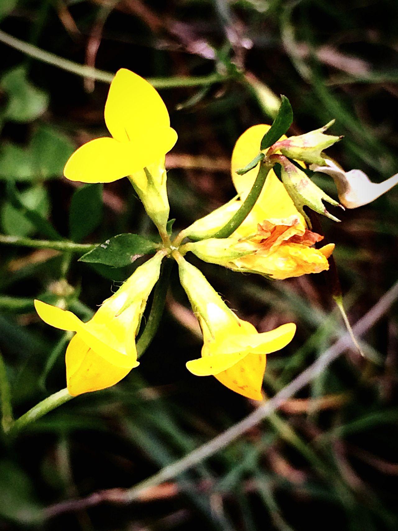 Colour Of Life Macro Photography Kwiatek Flower Śląsk Silesia Macro Kwiaty Przyroda