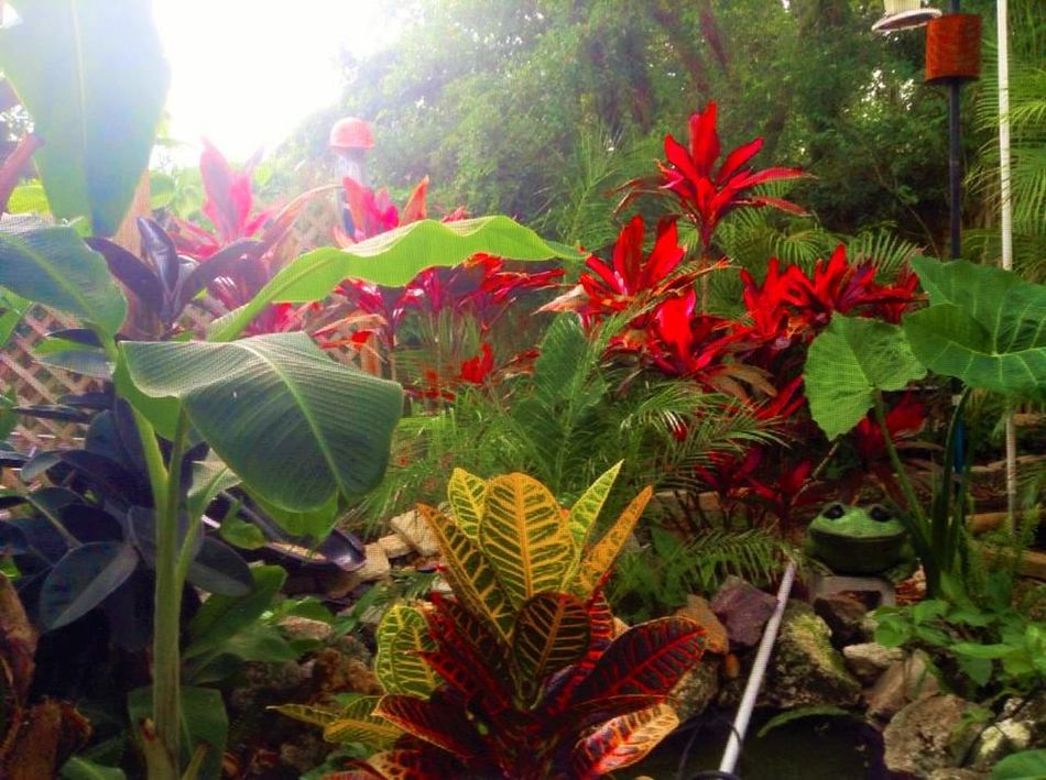 Landscape_photography Brilliant Tropicals Sunlight, Shades And Shadows Green Leaves Colour Of Life