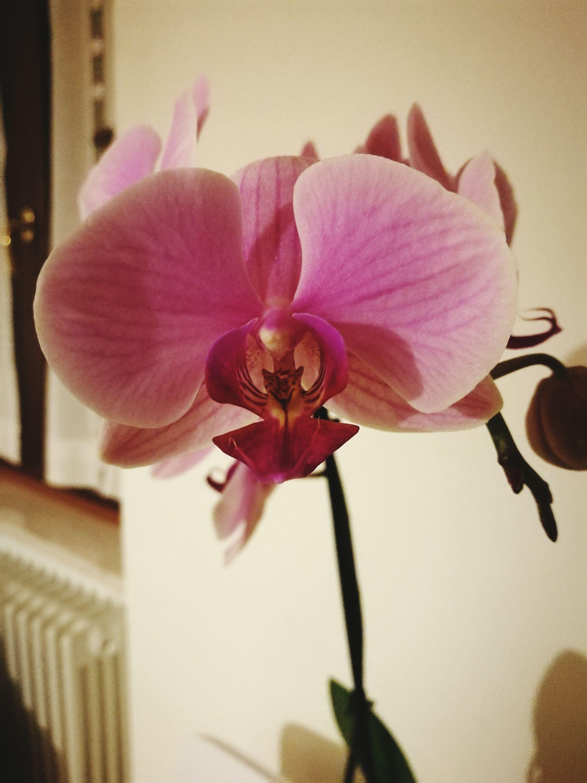 Orchidea First Eyeem Photo