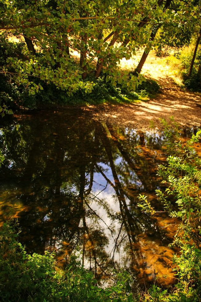 Water Tree Reflection Tranquility Nature Beauty In Nature Waterfront Standing Water Green Color No People EyeEm Gallery Check This Out Learn & Shoot: Composition Covarrubias Castilla Y León Burgos, Spain Reflections On The Water Reflection In The Water Framed By Trees Tranquil