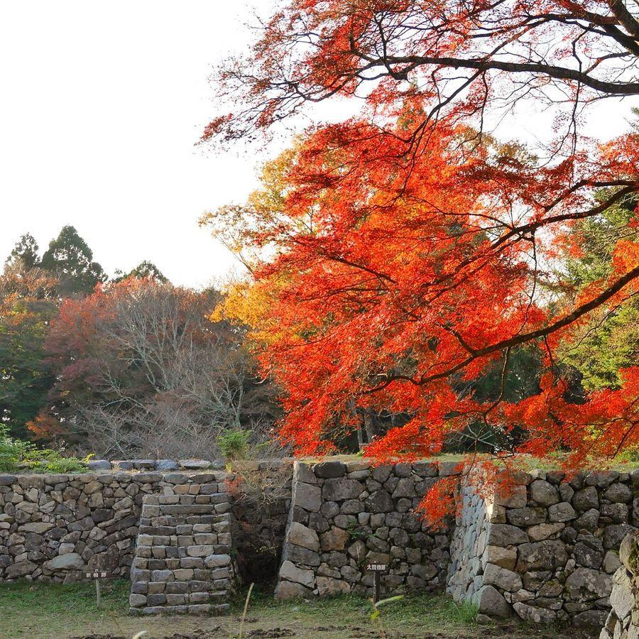 Autumn Autumn Leaves Japan Autumn Collection Autumn Colors 紅葉 Colors Of Autumn Tommy@collection OpenEdit EyeEm Nature Lover (null)EyeEm Best Shots 奈良県 高取城跡