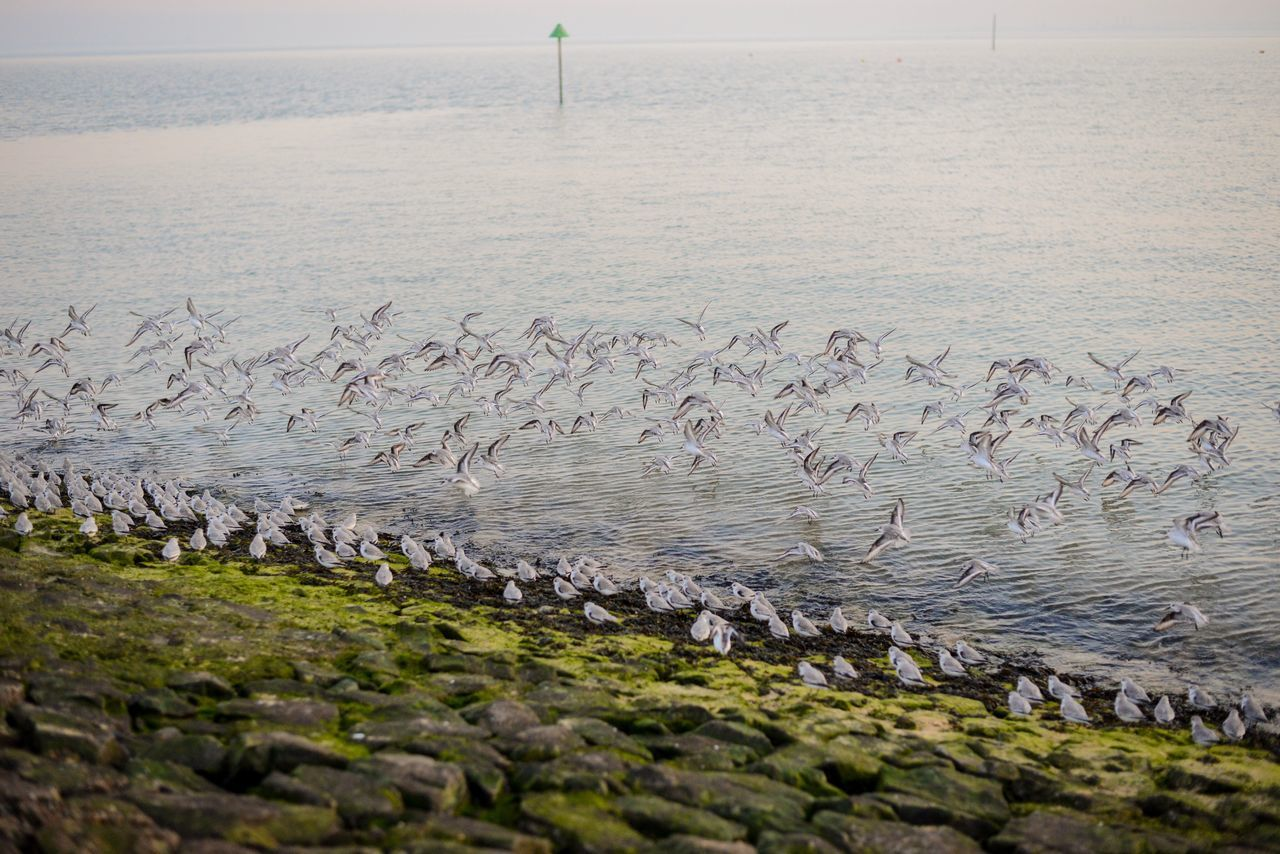 Large Group Of Animals Water Sea Nature Beach Outdoors Sky Tranquility Southend On Sea Landscape Tranquil Scene Beauty In Nature Horizon Over Water Nature