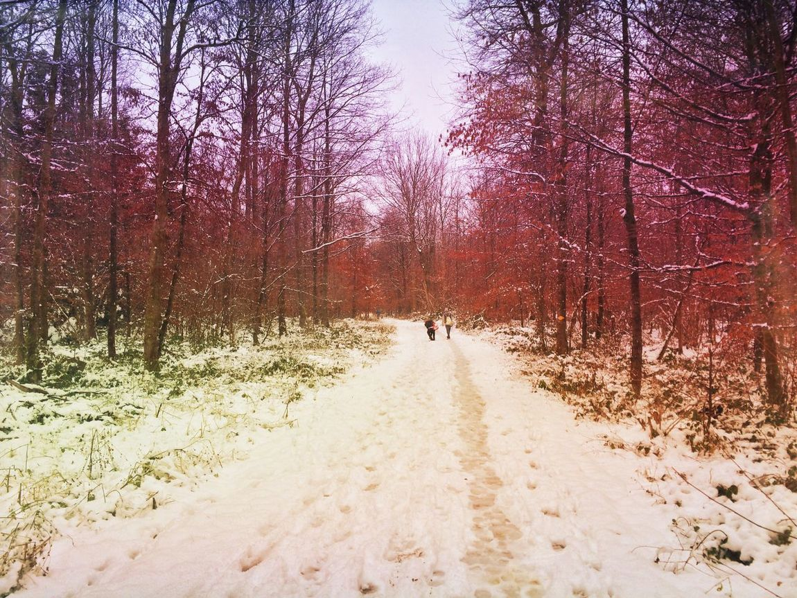 Winter forest Mexturesapp Landscape_Collection Snow Winter EyeEm Nature Lover EyeEmSwiss Tadaa Community Forest