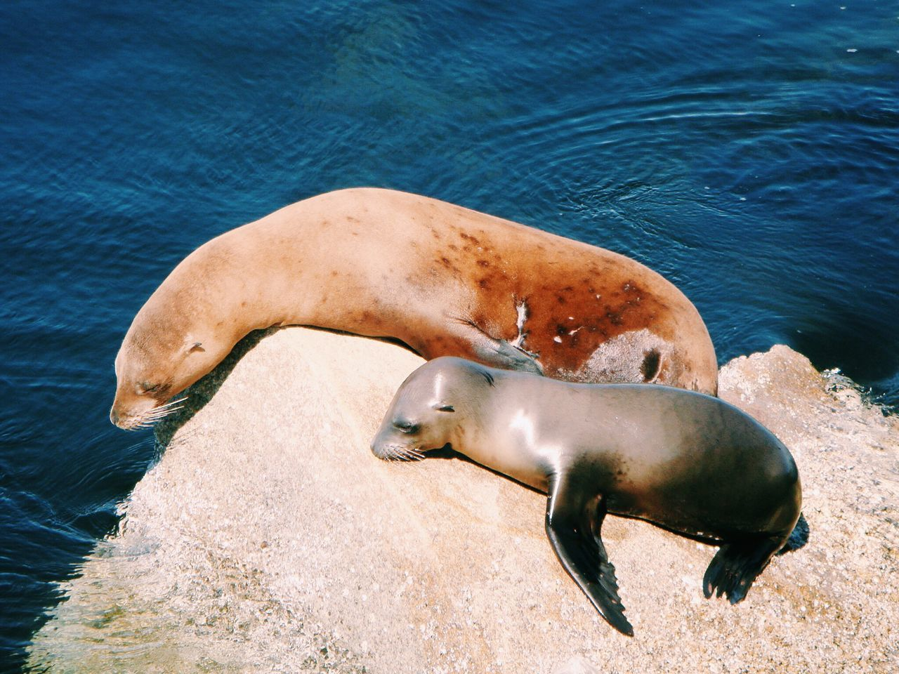 Beautiful stock photos of seal, Animal Family, Animal Themes, Animals In The Wild, Blue