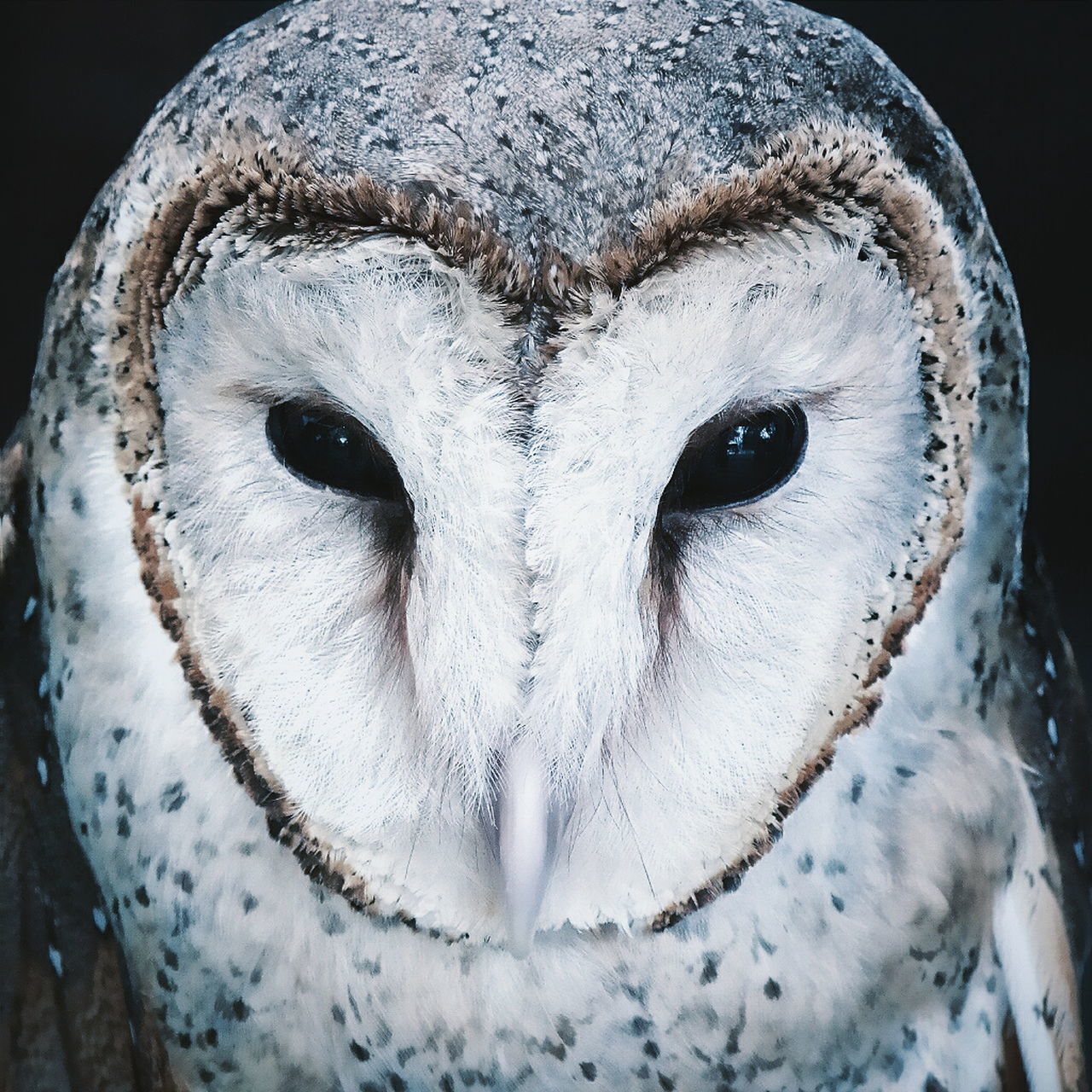 one animal, close-up, no people, animal themes, looking at camera, portrait, mammal, indoors, day, domestic animals, owl