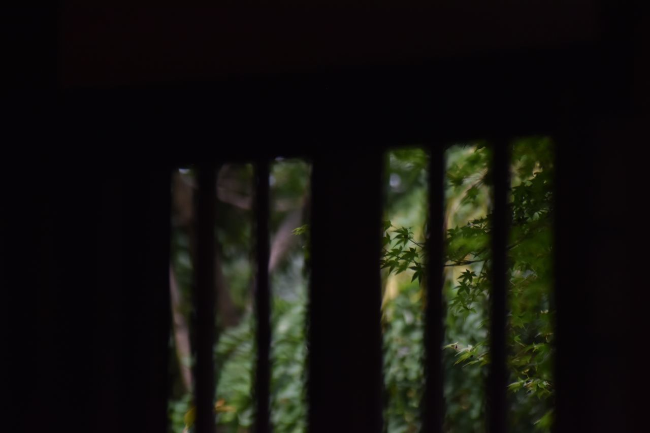 no people, nature, indoors, growth, fern, day, close-up, forest, beauty in nature, bamboo - plant, tree, architecture