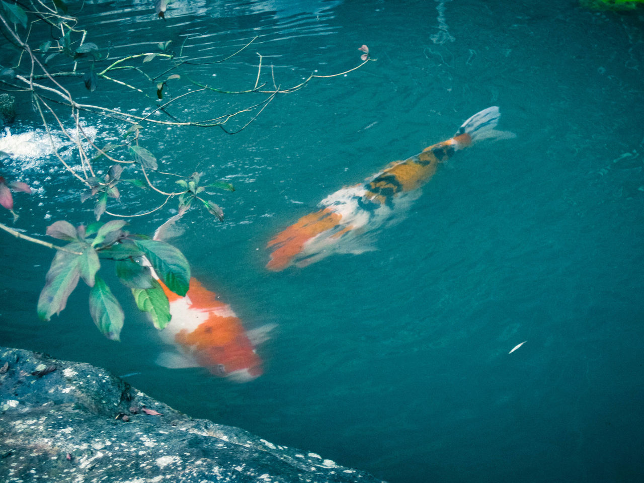 Animal Themes Animals In The Wild Beautiful Blue Blue Sea Charm Comfortable Day Fish High Angle View Leaf Meeting Nature No People Orange Outdoors Play Scenery Selective Focus Shine Stone Swimming Travel Warm Water