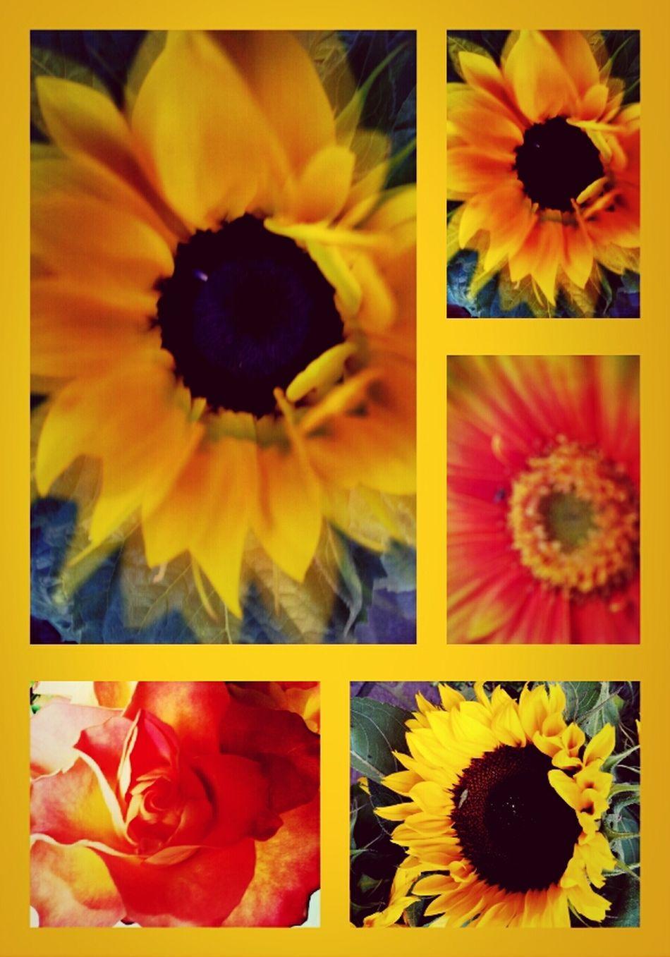 Fowlers Toad Flower Art Heartflowers Flower Power flower flowerstream BloomingGreat artflowers