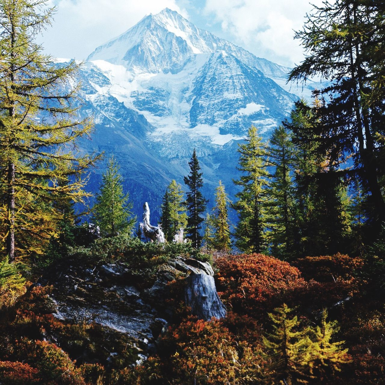 Big mountain in Switzerland - Davos Mountain Pine Tree Snow Rock - Object Forest Nature Tree Mountain Range Adventure Pine Woodland Scenics Landscape Cold Temperature Hiking Beauty In Nature Mountain Peak Environment Tranquil Scene Rocky Mountains Winter