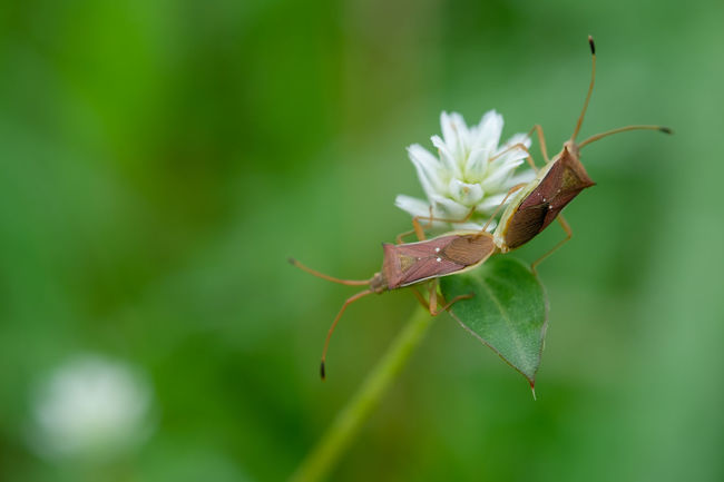 Animal Themes Animals In The Wild Beauty In Nature Close-up Day Flower Flower Head Focus On Foreground Fragility Green Color Insect Leaf Mating Pair Of Insects Nature No People One Animal Outdoors Plant