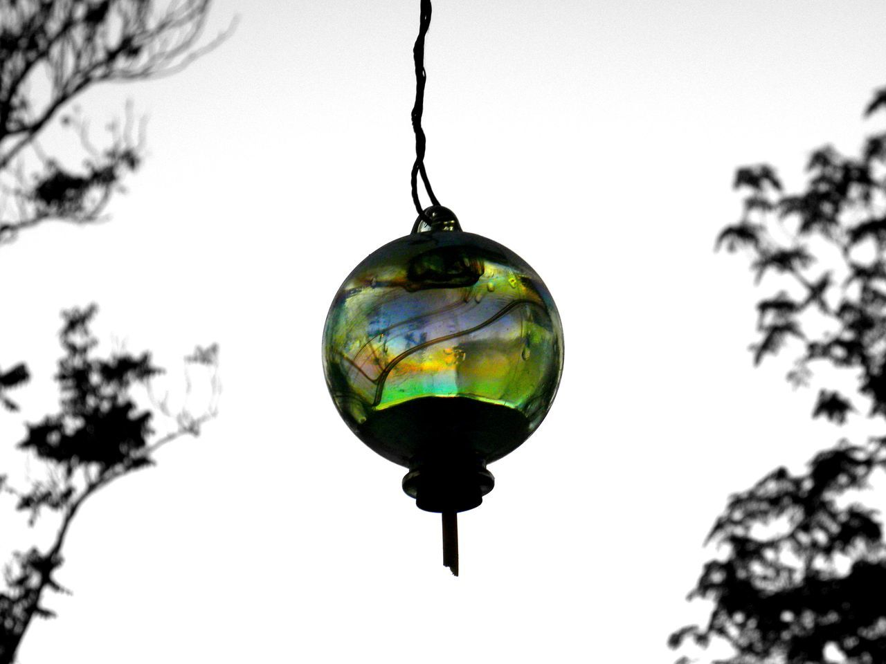 Taking Photos Color Photography Daytime California Riverside California Outdoors No People, Clear Sky Trees Clearsky Hummingbird Feeder Showcase July Colour Of Life Home Is Where The Art Is Eyemphoto