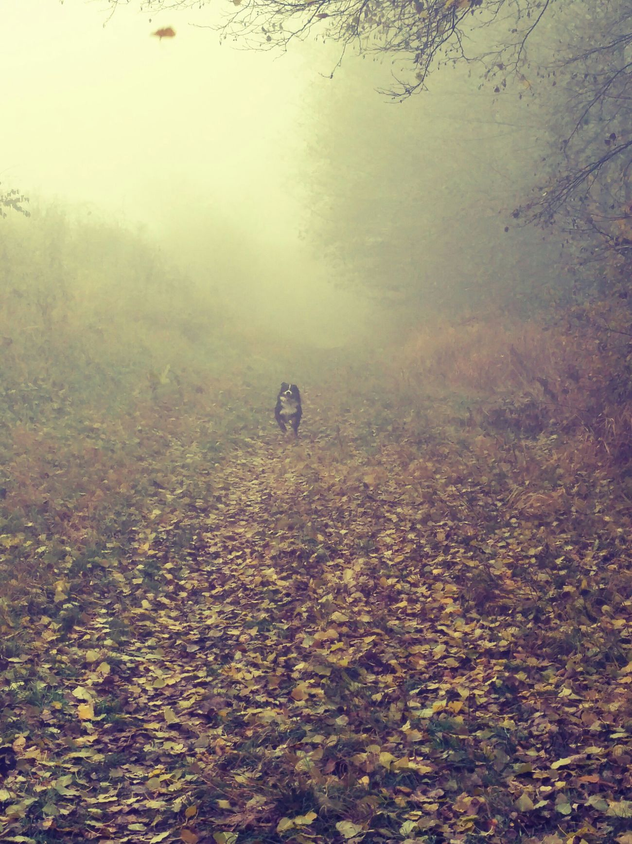 atumn colors dog foggymorning