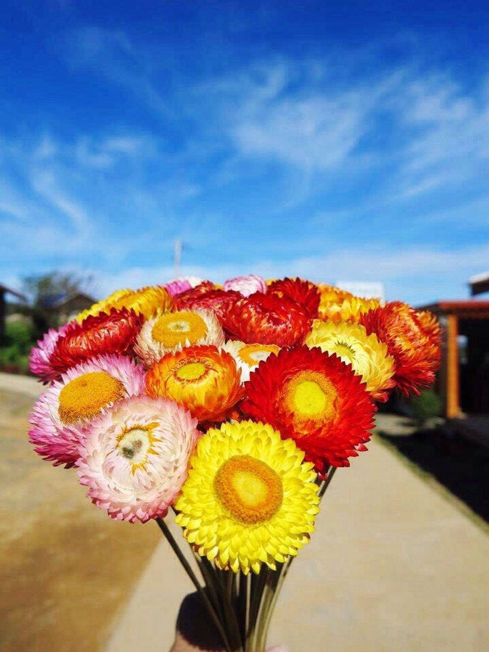 flower, fragility, flower head, close-up, no people, day, beauty in nature, freshness, multi colored, sky, outdoors, nature