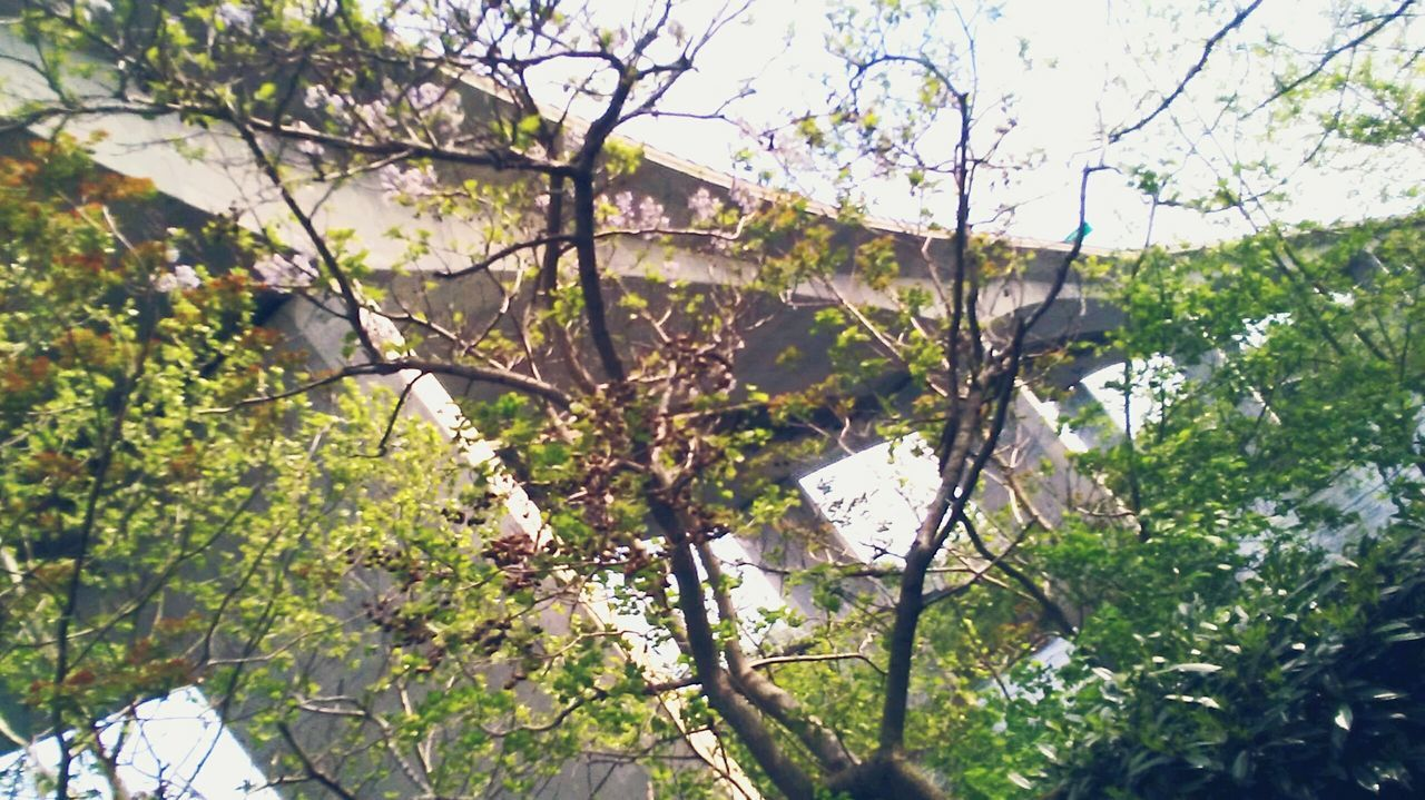 Bridgeporn Live For The Story Nature Summer Tree Growth Day Branch Bridges Of The World Bridge Collection Outdoors Low Angle View Nature No People Beauty In Nature Sky Freshness Fishing Water Tree Full Length Beauty In Nature Scenics The Architect - 2017 EyeEm Awards
