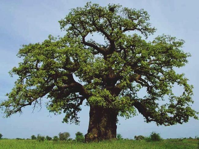 Tabaldy Tree