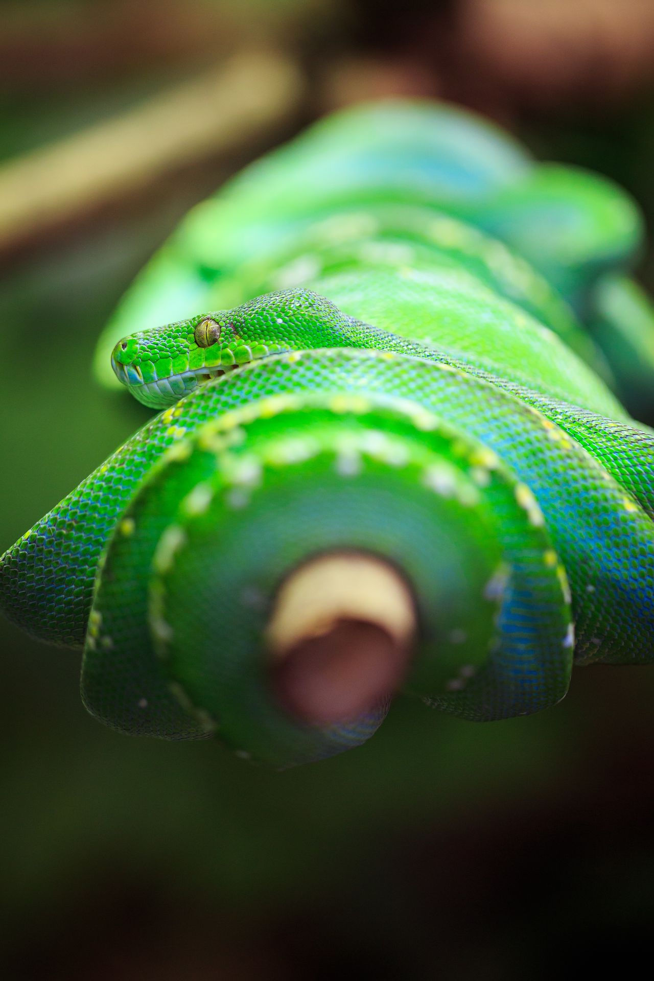 Animal Beauty In Nature Bokeh Close-up Green Green Color Macro Snake Tranquility