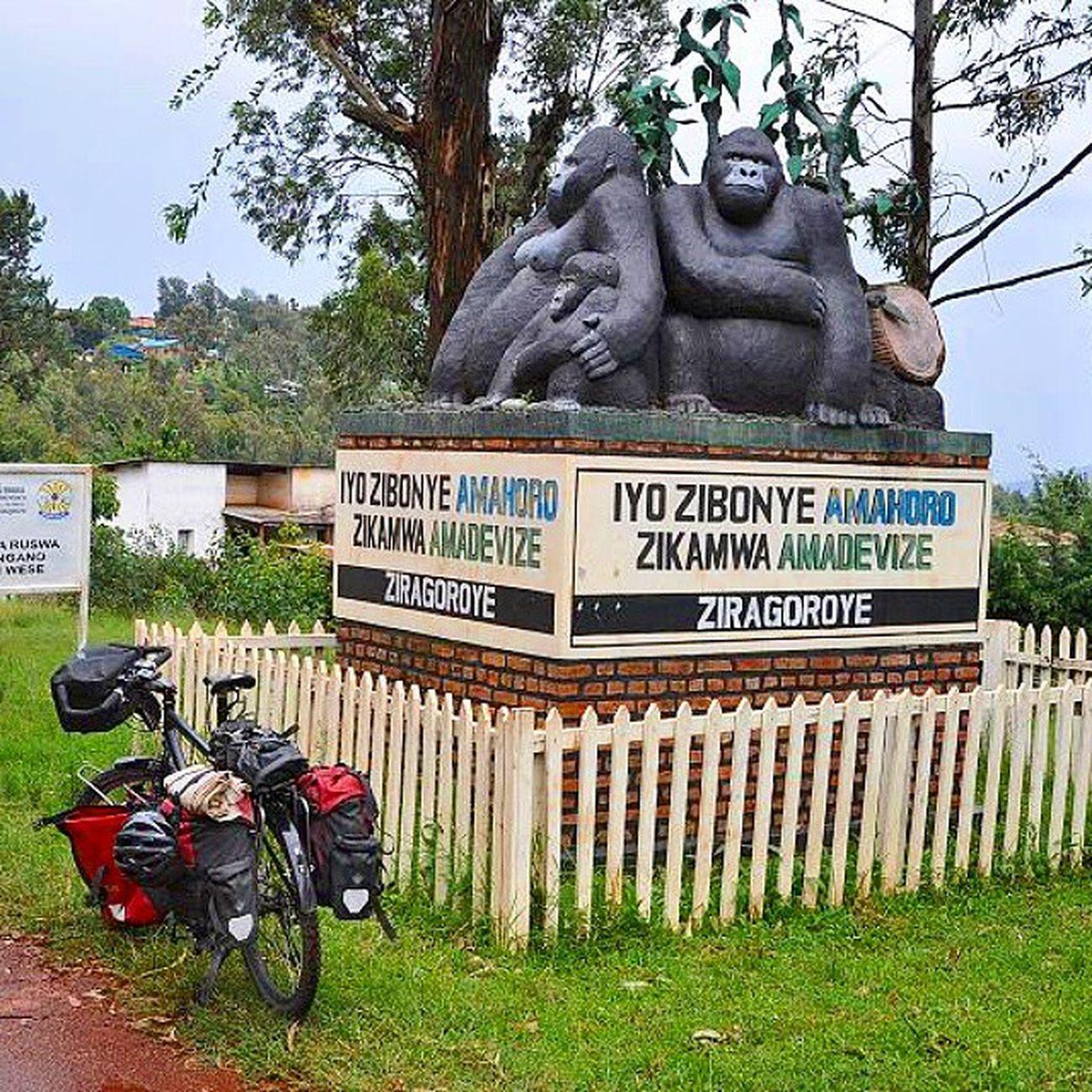 Once in East-Africa: entering Virunga Volcano mountains in Rwanda , on my way to Uganda  . Biketouring Travel Instatravel 😚 Cycling Fahrrad Africa Gorilla Adventurecycling Nofilter Latergram Volcano Mountains Eastafrica Bikingafrica Cycling Reise Afrika Ruanda