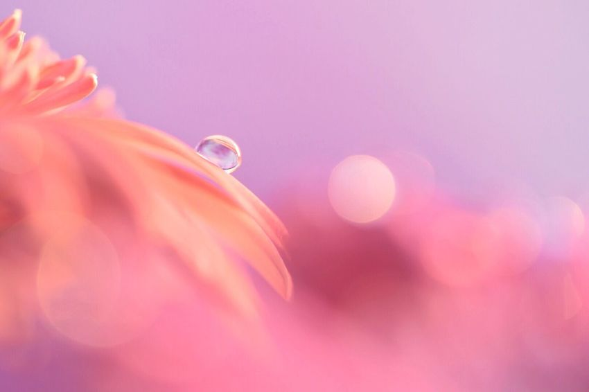 Fragility Flower Close-up Nature Drop Growth Beauty In Nature Water Outdoors Flower Head Freshness No People Day