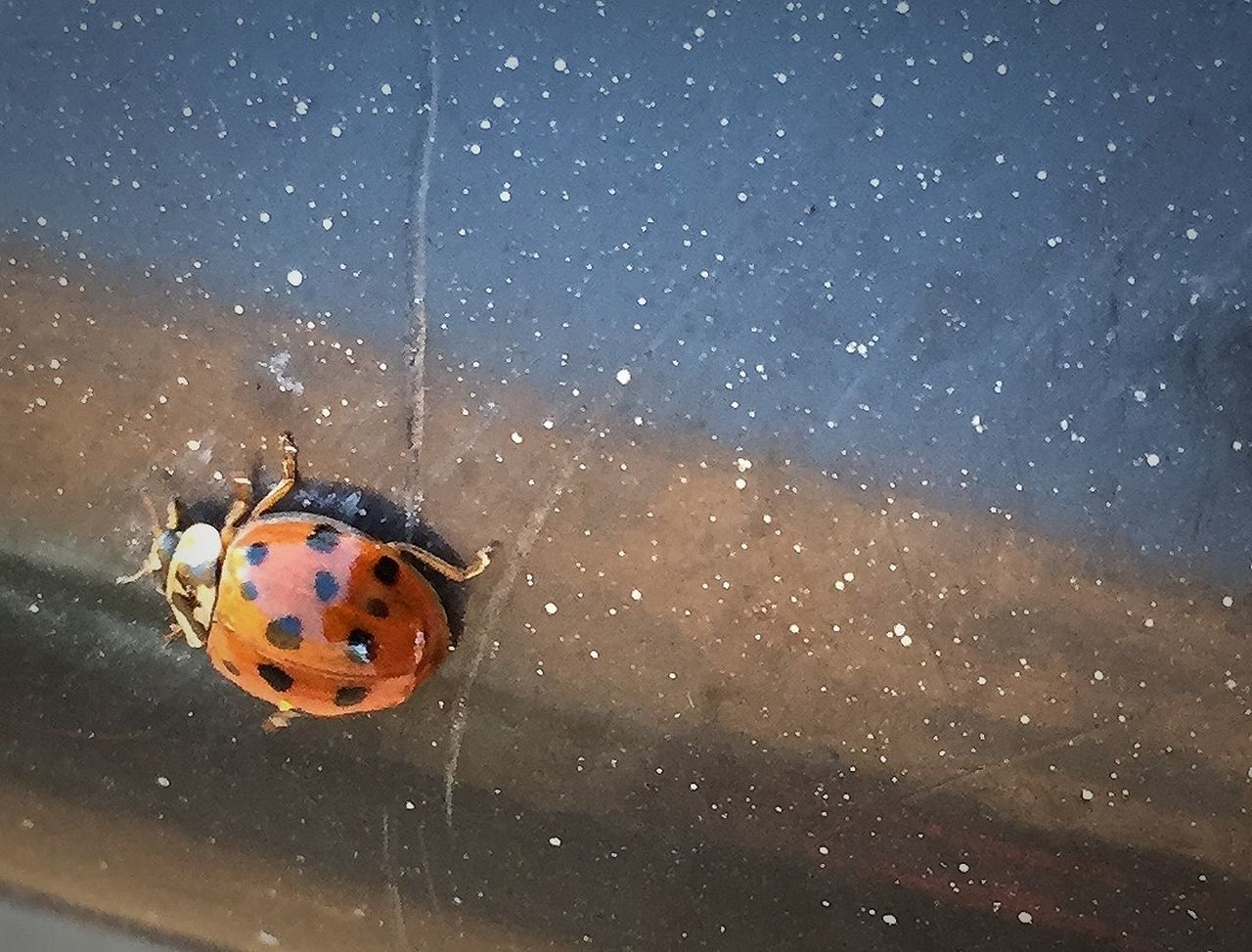 Nyckelpiga Ladybug October Sweden