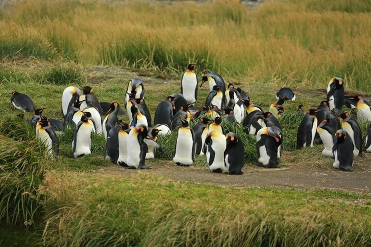 Animals In The Wild Penguins Animal Wildlife Outdoors Beauty In Nature No People Endoftheworld Antarctica