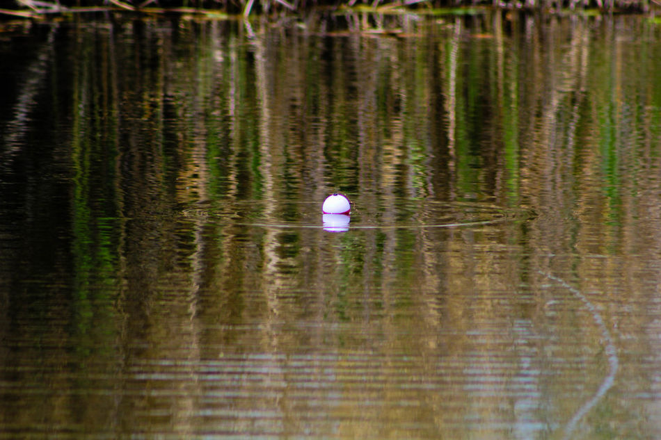 Beauty In Nature Bobber Fishing Floating On Water Getting A Bite Lake Nature Outdoors Reflection Rippled Tranquil Scene Tranquility Water