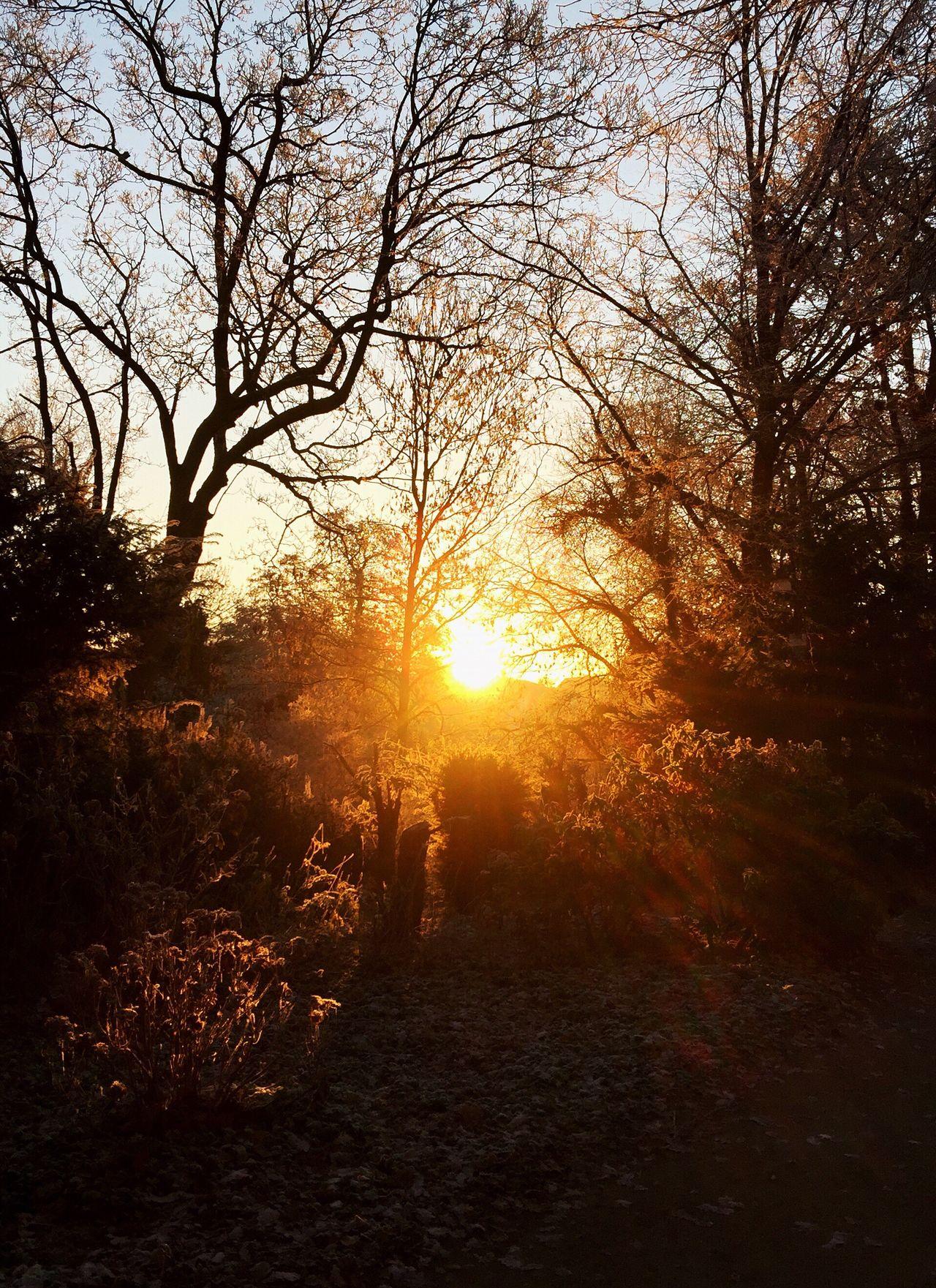 Nature Tree Sunset Sun Sunlight Beauty In Nature Scenics Tranquil Scene Sunbeam Tranquility Idyllic Landscape Non-urban Scene Outdoors Sky No People Bare Tree Day Sunrise Sonnenaufgang Bremen Am Wall Winterzeit Winter ❄