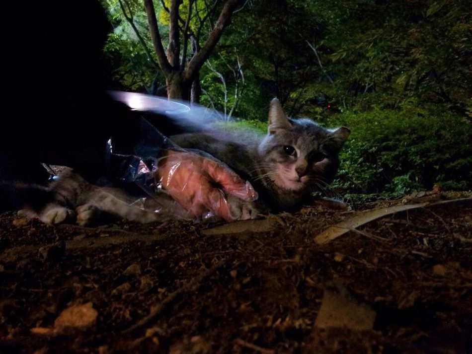 Seokchon Lake Cats Night Animal Night Cat Feralcat No People Nature Close-up Catlover