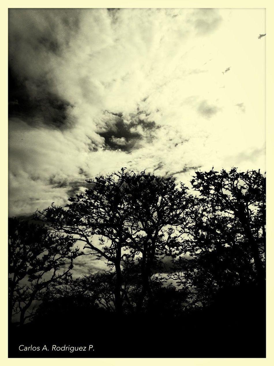 Tree And Sky Schattenspiel
