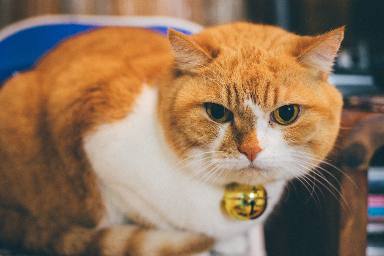 Animal Themes Car Cat Catoftheday Cats Cats Of EyeEm Catsagram Catsofinstagram Close-up Day Domestic Animals Domestic Cat Feline Indoors  Looking At Camera Mammal No People One Animal Pets Portrait Whisker
