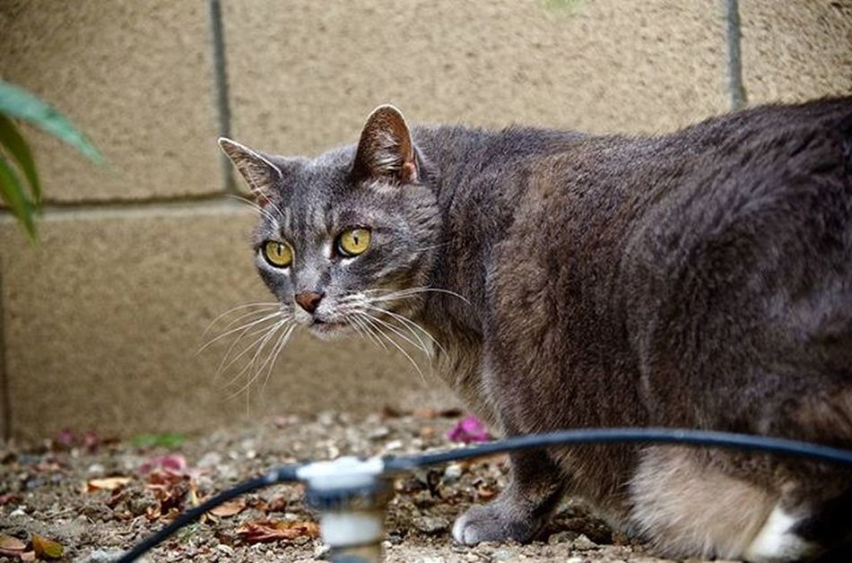 Missing Sophia on National Cat Day! Cat Pentaxk50 Pentaxcamera Pentax Pentaxagram Pentaxiansunite Pentaxiansstandup